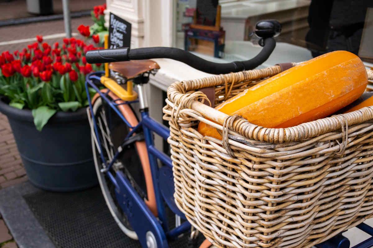 Nederlands kaaswiel in mand van een fiets met rode tulpen op de achtergrond